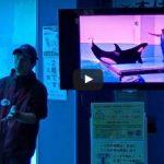 シャチの飼育員解説  名古屋港水族館 2015年10月からスタートした新しいイベント