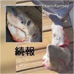 【続報】切り刻まれたサメ DNA鑑定で種類判明 アメリカ カリフォルニア州