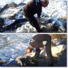 体長2.5mの弱った ヨシキリザメ 打ち上げられ 救出成功!? イギリス