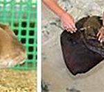 ふれてみてサメと海の生きものたち 東海大海洋科学博物館にて
