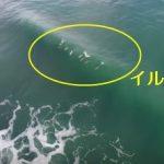イルカの普段の遊びが可愛すぎる映像 ニュージーランド