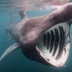 ウバザメ 長年の謎!冬眠するサメは本当か? 2015年12月11日