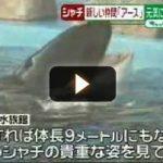 [動画] シャチのアースが名古屋へお引っ越し 名古屋港水族館