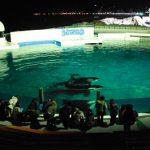 シャチトレーナーが4頭のシャチたちを個々に紹介するミニ観察会など有り 「大人のナイトステイ」2016年6月11・18・25日、7月2・9日限定開催 鴨川シーワールド