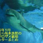 2016年1月沖縄美ら海水族館のホホジロザメ騒動ツイッターまとめ