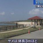 サメの歯形? シャークアタック  沖縄 スーサイド 米須海岸 2015年10月26日