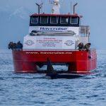 船の騒音がシャチの生息数に重大な影響 PeerJ誌にて発表 2016年2月2日