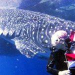 中国人がインドネシアでジンベエザメ密漁か? ジンベエザメは救出され海へ