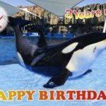 「HAPPY BIRTHDAY!リン」 誕生日イベント 開催日時   平成27年11月13日~15日 各日各回 先着200名様 ポストカードプレゼント! 名古屋港水族館