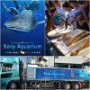 飼育員からサメの秘密を学んでお魚博士になっちゃおう!~について Sony Aquariumの体験プログラム 銀座 ソニービル