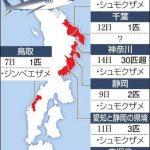 夏の海に押し寄せるサメ 血の臭いに敏感、油断は禁物(2015/08/15)朝日新聞デジタル