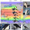 22万年前以降に多様化したシャチ、世界の海に生息 国際研究チーム発表