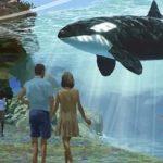 水族館でシャチが見れなくなる!? 米カリフォルニア州