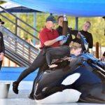 シーワールドのシャチ 「Unna」が病死 アメリカ サンアントニオのシーワールド 2015年12月21日