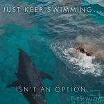 とにかく泳ぎ続けろ 映画 「ロスト・バケーション」2016年7月23日公開 最新予告動画字幕付き
