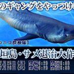 【ニコニコ生放送番組予告】 石垣島・サメ退治大作戦 2日間 2016年7月25・26日開演 午前6:30から