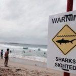 サーファー、ボードからサメに突き落とされる サメ出没でクロヌラ・ビーチ閉鎖 オーストラリア 2016年3月28日