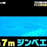 サメもちょっと出てくる 日曜ファミリア・世界のスゴい動物園&水族館ベスト20 2016年2月28日