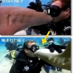 [閲覧注意]コモリザメにキスをした結果⇒唇重傷