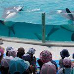 イルカやシャチなどの海獣類や魚類とのふれあい「サマースクール」参加者募集 小学生対象 鴨川シーワールド