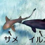 イルカのサメの殺し方がひどすぎると話題に