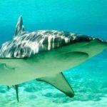 サメ?千葉・銚子沖で目撃情報 遊泳禁止に (2015/08/19)