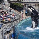シャチのショー廃止 日本にも波及か SankeiBiz(サンケイビズ)2015年11月17日