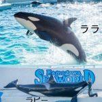 シャチの誕生日、体長、体重 鴨川シーワールドと名古屋港水族館