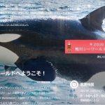 いきなり巨大シャチ出現! 鴨川シーワールドのホームページ 2015年12月27日