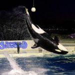 夜の特別パフォーマンスも!2015年9月19日(土)から23日(水・祝)の5日間限定 鴨川シーワールドでシルバーウィークイベント開催