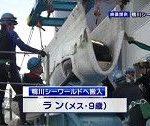 シャチのラン(メス9歳)、名古屋港水族館から鴨川シーワールドへ移動