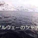 【動画】シャチとの遊泳など ノルウェーの自然と共に MΛJIK – Save Me