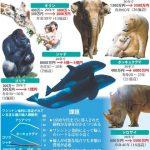 ゾウやゴリラ、シャチなど動物園や水族館の「2030年問題」