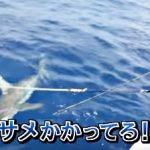 【サメ番組予告】緊急 ! ニッポンを襲う世界の超S級危険生物 2016年8月22日夜7時~TBSにて