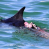 漁港内にサメ? イルカ襲われ血を流す 石垣島 沖縄タイムス+プラスより