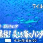 【サメ番組予告】南太平洋ポリネシア サメ大集結!美しき海のハンターに迫る NHK BSプレミアム ワイルドライフ 2016年9月5日(月) 午後8:00~