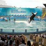 シャチ、ロリータを解放せよ! 動物保護団体がアメリカ政府を訴える