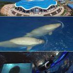 ロシア最大水族館 オープン延期のお知らせ ウラジオストク