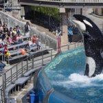 シャチのショー廃止へ 動物愛護団体の批判受け 米サンディエゴ 産経 2015年11月10 日
