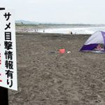 遊泳禁止は解除も 「書き入れ時」不安の声 一宮町のサメ目撃情報2015年08月14日 10:29