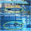 ティリクム 医療用プールから普通のプールへ 保護団体発表 アメリカ シーワールド