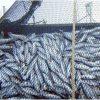 密漁品規制が遅れる日本 欧米など新協定2016年6月5日発効