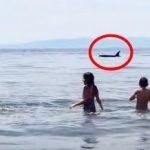 子供達大喜び シャチが突然海岸に現れる