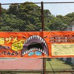 イチハラビロウドザメ JAMSTEC横須賀本部の施設一般公開のイベント 深海ザメの体の中をのぞいてみよう!