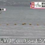 鹿児島でもサメ目撃情報 海水浴場が閉鎖に 8月12日(水)19時25分