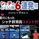 シャチ飼育員の愛のこもったコメント付きポストカードが新登場 名古屋港水族館