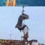 ジンベエザメを捕殺した容疑者逮捕 中国