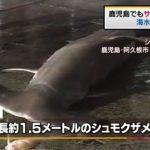 鹿児島の海水浴場、サメ目撃情報で閉鎖 TBS系(JNN) 8月12日(水)14時1分