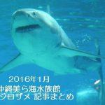 2016年1月 沖縄美ら海水族館 ホホジロザメ 記事まとめ