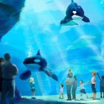 シャチプールの1億ドル拡張計画の中止を発表 サンディエゴのシーワールド